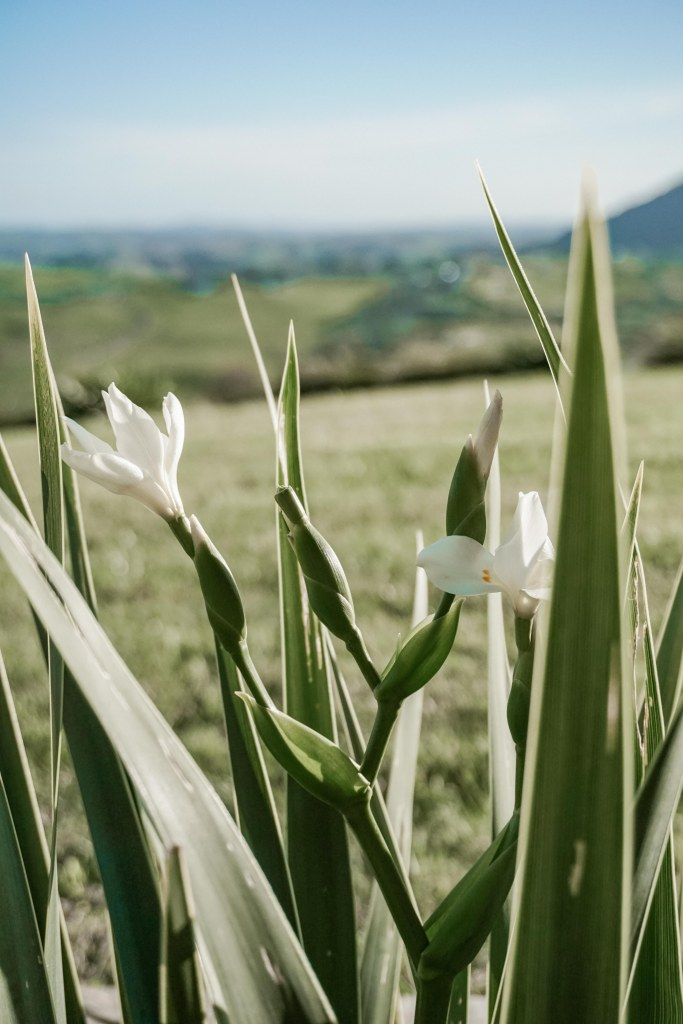 White flowers against green leaves, grass and a blue sky.